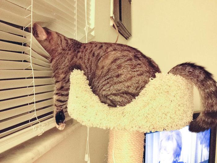 cat-window-waiting